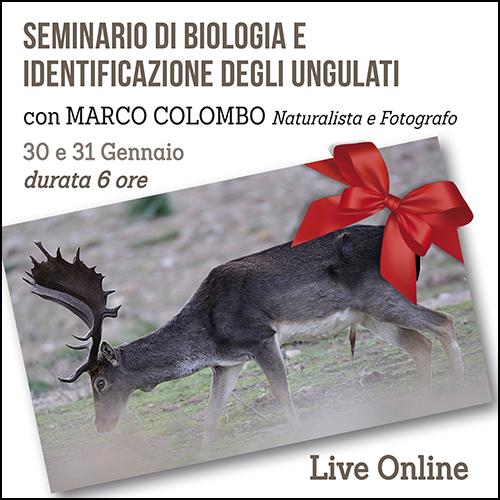 buono_regalo_seminario_ungulati_500x500pixel