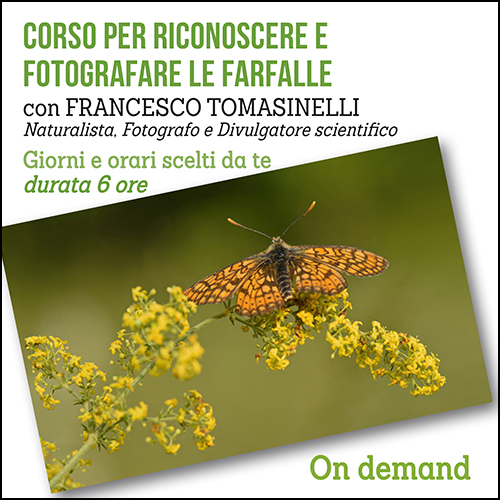 shop_farfalle_ondemand_500x500pixel