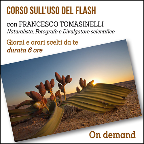 shop_flash_ondemand_500x500pixel_new
