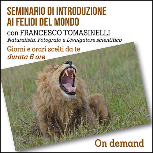 shop_seminario_felidi_500x500pixel