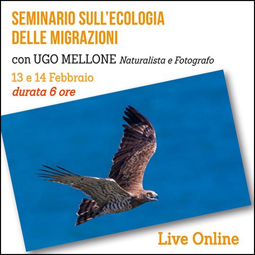 shop_seminario_migrazioni_500x500pixel