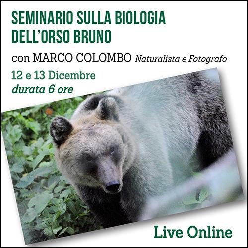 shop_seminario_orso_500x500pixel