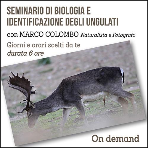 shop_seminario_ungulati_500x500pixel