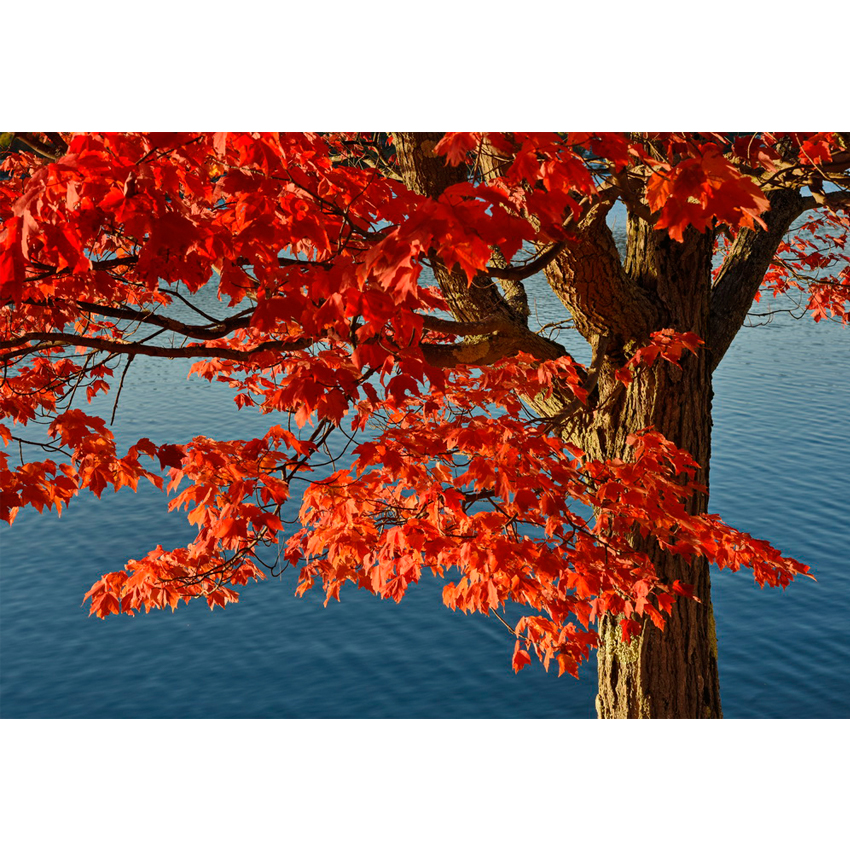 Foliage US 1