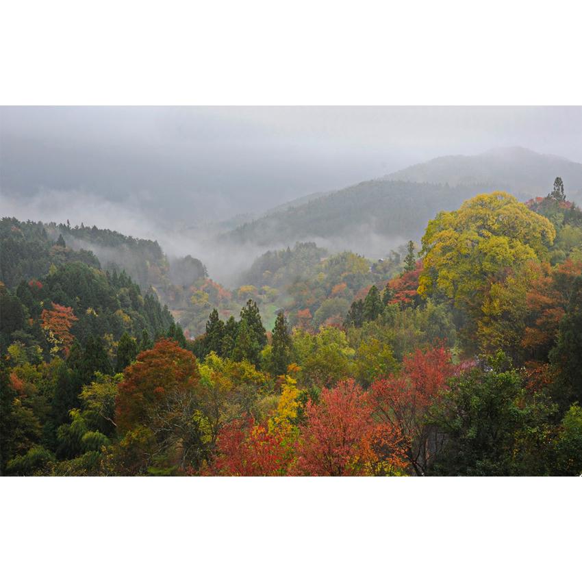 Foliage nipponico 06