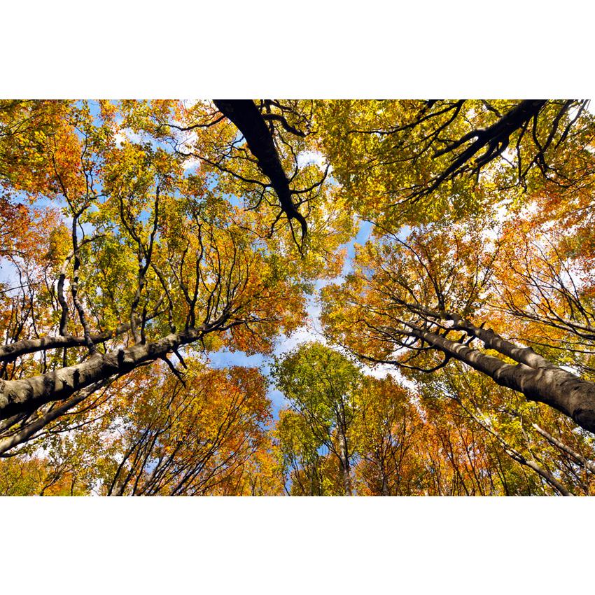 Foreste Casentino