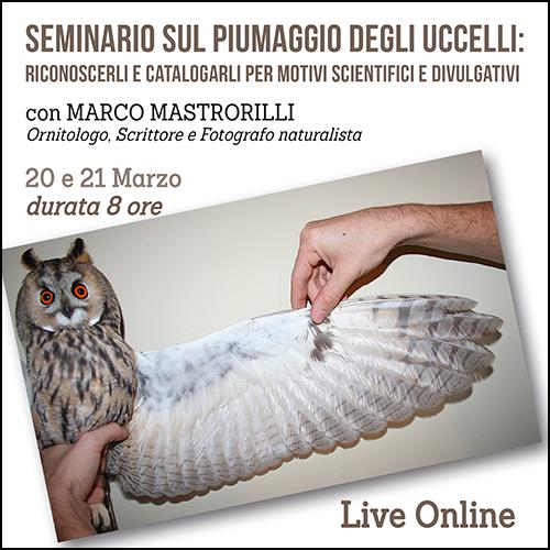 shop_seminario_piume_500x500pixel
