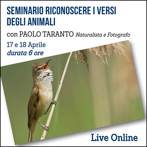 shop_seminario_versi_animali_500x500pixel