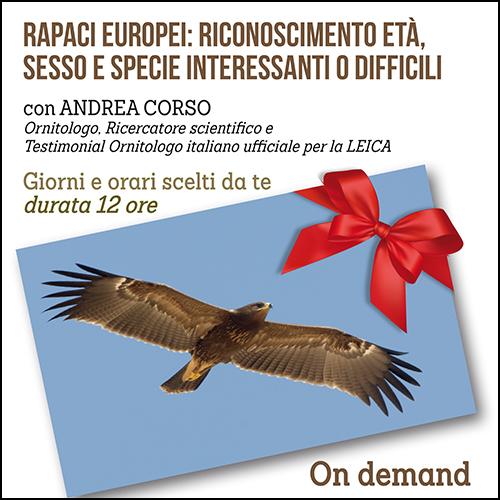 buono_regalo_rapaci_andrea_corso_500x500pixel