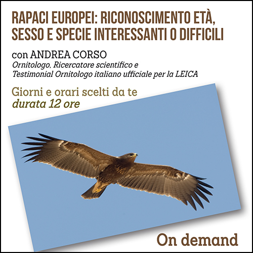 shop_rapaci_andrea_corso_500x500pixel