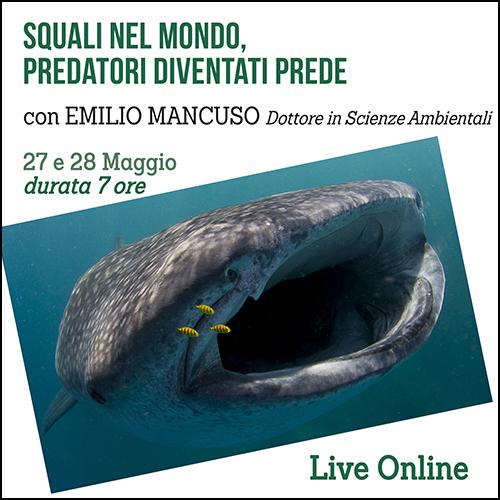 shop_squali del mondo_500x500pixel