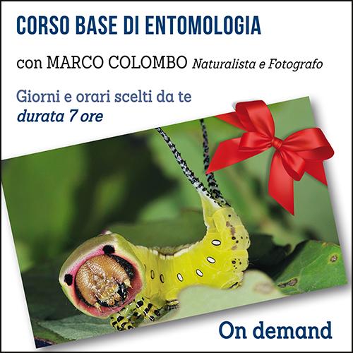 buono_regalo_entomologia_500x500pixel
