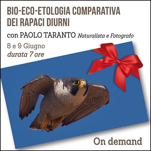 buono_regalo_etologia_rapaci_taranto_500x500pixel