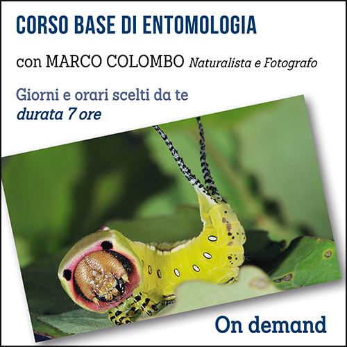 shop_entomologia_500x500pixel OK