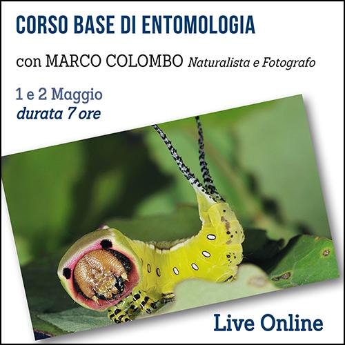 shop_entomologia_500x500pixel
